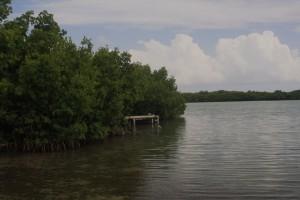 manglar mareas