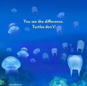 Foto bolsas plásticas y medusas