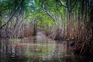 canales-del-pantano-cibuco